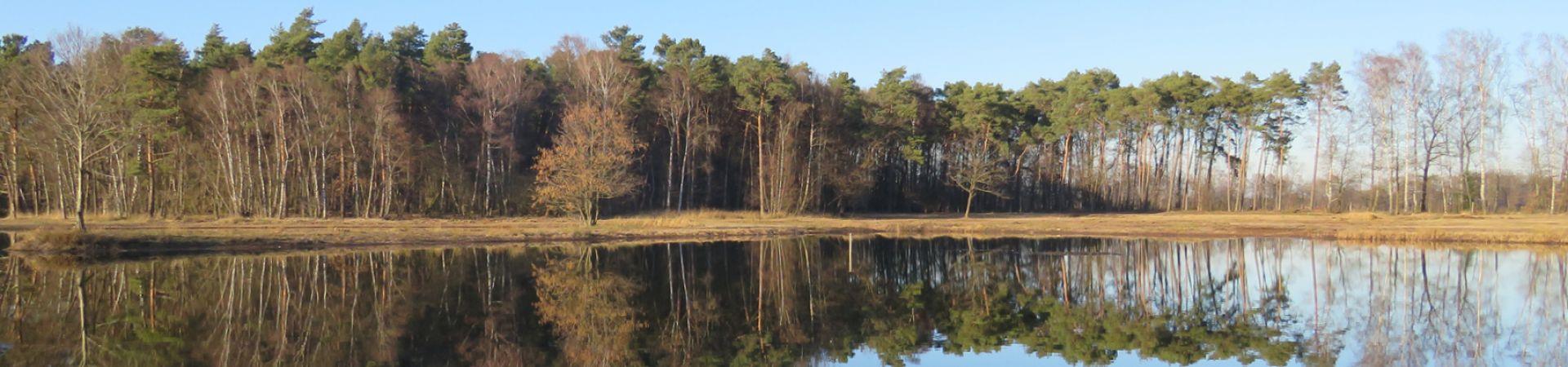 See mit sich spiegelnden Bäumen